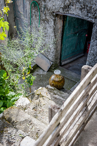 Pickled green olives in the vineyards above Vernazza, Cinque Terre, Italy
