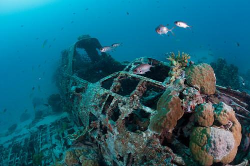Japanese Kate Bomber wreck, New Ireland, Papua New Guinea