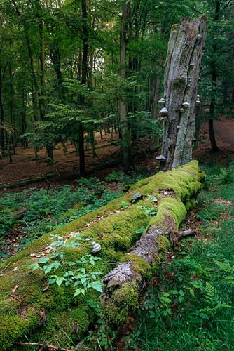Kleine Waldszene am Feldberg im Taunus, Hessen, Deutschland