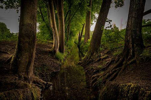 Bäume am Uferrand eines kleinen Baches in der Aubinger Lohe, Bayern, Deutschland, Europa