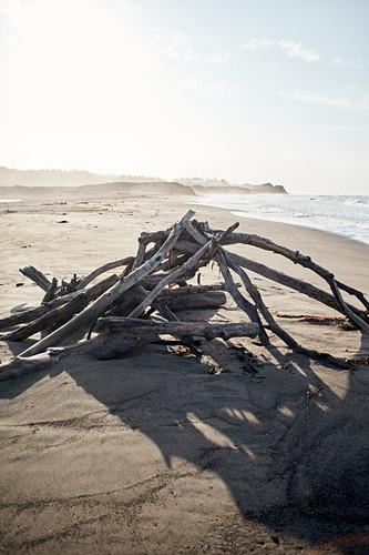 Treibholz am Strand des Hearst San Simeon State Parks am frühen Morgen, Kalifornien, USA.