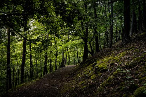 Pfad im Wald am Daudenberg, Nationalpark Kellerwald-Edersee, Hessen, Deutschland, Europa