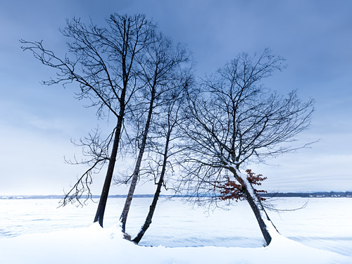 Bäume am  Ufer des Starnberger See im Winter bei Schnee, Tutzing, Bayern, Deutschland