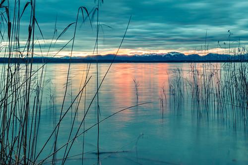 Schilf im Wind am Starnberger See bei Sonnenaufgang, bayern, Deutschland