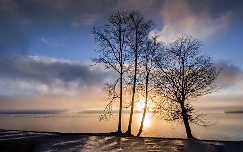 Bäume bei Sonnenaufgang am Ufer des Starnberger See, Tutzing, Bayern, Deutschland