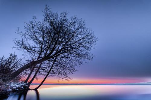 Baum im Park bei Sonnenaufgang am Starnberger See, Tutzing, Bayern, Deutschland