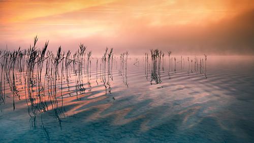 Spiegelnde Wolken und Schilf bei Sonnenaufgang am Starnberger See, Bayern, Deutschland