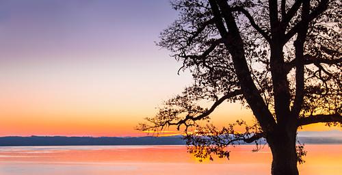 Kahler Baum als Silhouette bei Sonnenaufgang am Starnberger See, Bernried, Bayern, Deutschland