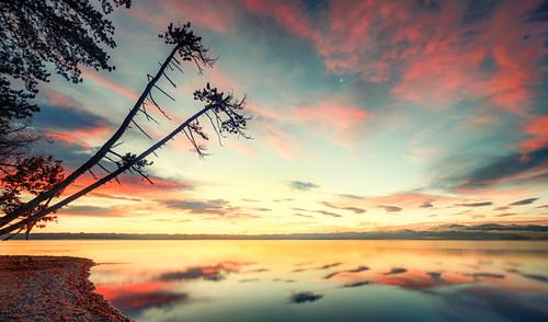 Sonnenaufgang mit Baumsilhouetten am Starnberger See, Brahmspromenade, Tutzing, Bayern, Deutschland