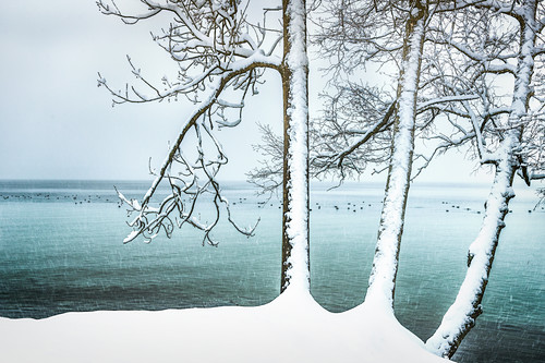 Beschneite Bäume am Ufer des Starnberger See, Schneefall in Tutzing, Bayern, Deutschland