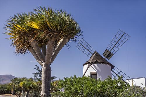 Restaurierte Mühle von Antigua, Fuerteventura, Kanaren, Spanien