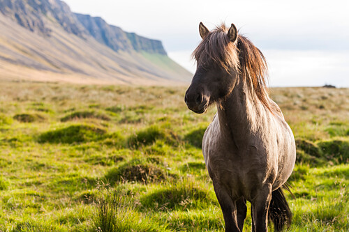 Horse in Field with Mountains in Background