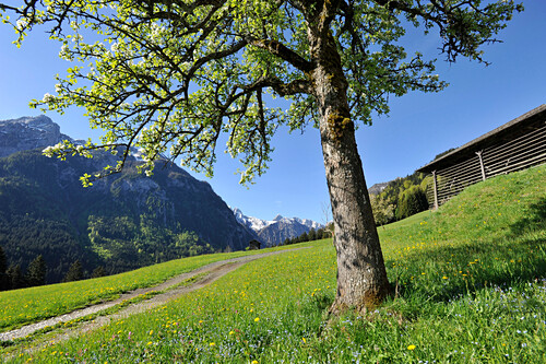 Hay barn in the Valley of Lesach, view to the Karnischer Kamm, East Tyrol, Austria
