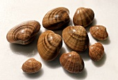 Smooth or Brown Clam