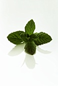 Sprig of Peppermint