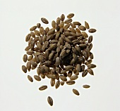 Grains of Barley