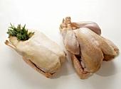 Fat Goose & Turkey