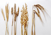 Four assorted Kinds of Grains