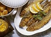 Roasted Green Herrings with Potatoes