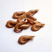 North Sea Shrimp