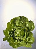 A Head of Butterhead Lettuce