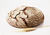 A Loaf of Coarse Rye Bread