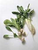 White turnips and white icicle radishes