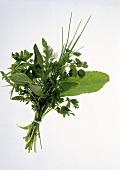 Bouquet of Fresh Herbs