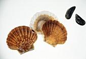 Blue Mussels & Scallops