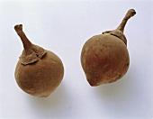 Large Colombian Sapota