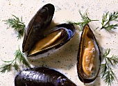 Blue Mussels in Creme Fraiche