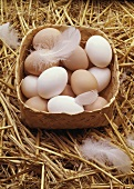 Fresh Eggs in Basket with Feathers