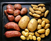 Assorted Kinds of Potatoes