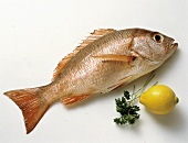 Whole Red Snapper with Lemon