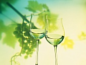 Two Glasses of White Wine; Green Grape Backdrop