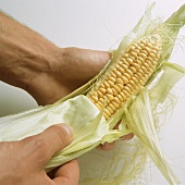 Removing the husk from a corncob