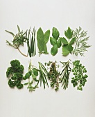 All kinds of herbs