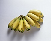 Yellow Sugar Bananas