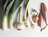 Various varieties of onion