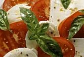 Insalata caprese (Tomaten, Mozzarella und Basilikum, Italien)