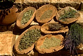 Still Life : Assorted Dried Herbs
