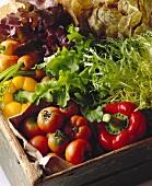 Pepper; tomato and lettuce