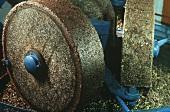 Oliven zu Öl verarbeiten : Oliven zum Brei zermahlen