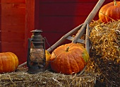 Pumpkin Still Life; Pumpkins in Hay