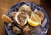 Oysters on Ice with Lemons; Oyster Knife