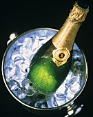 Bottle of Champagne on Ice in a Cooler