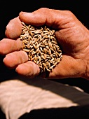 Hand Holding Spelt Grains