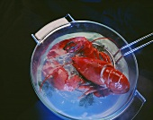 Cooked Lobster Coming out of a Pot