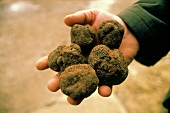 Hand holding five truffles