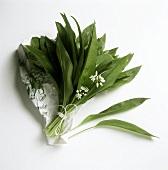 A bunch of flowering ramsons (wild garlic)